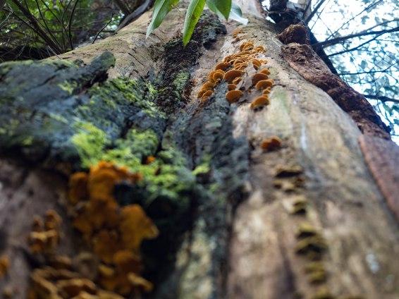 Fungi Marysville Victoria