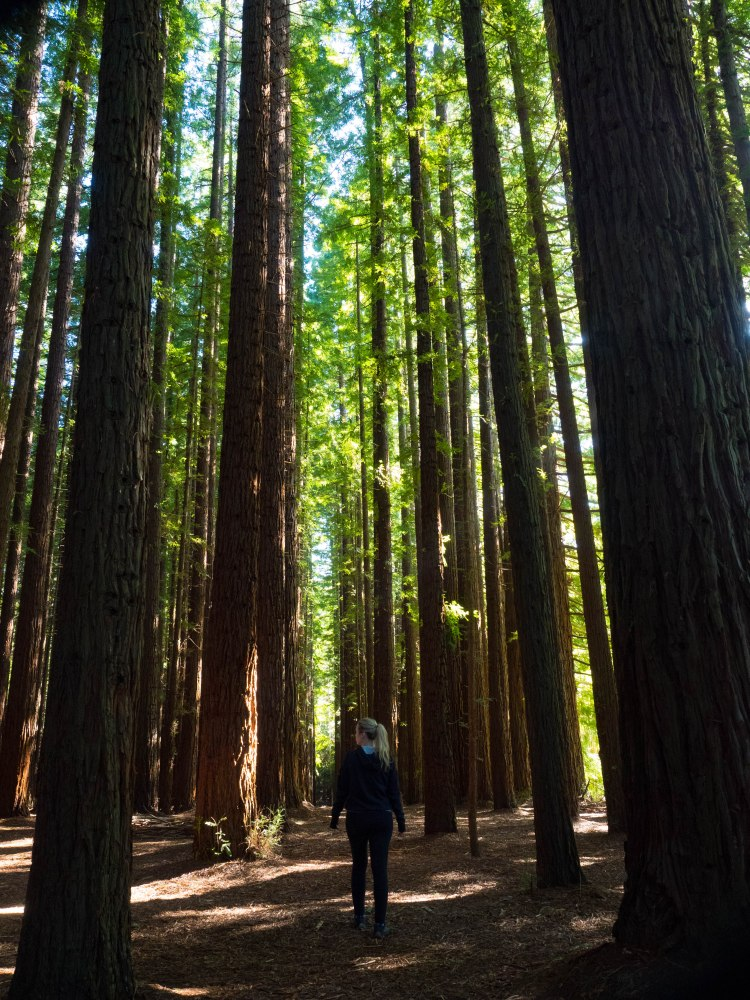 Warburton Californian Redwood Forest